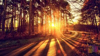 дорога, деревья, солнце, 2018