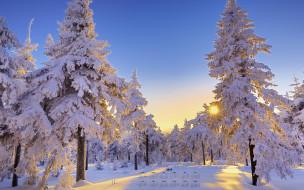 деревья, снег, 2018