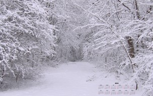 2018, деревья, снег