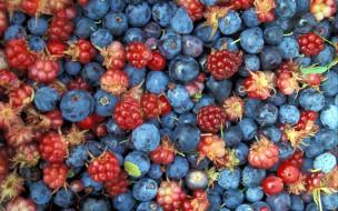 ягоды, голубика, костяника