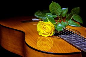 музыка, -музыкальные инструменты, гитара, роза