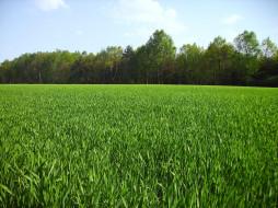 поле, деревья, трава