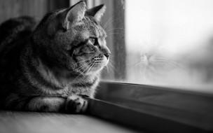 кот, животные