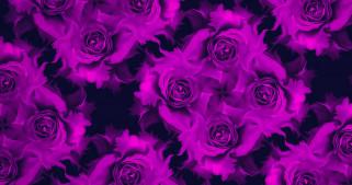 отражение, лепестки, коллаж, цветы, бутон, роза