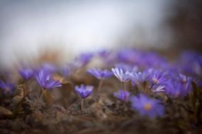 весна, сиреневые, поляна