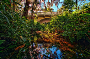 мостик, тропики, водоем