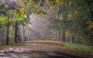 аллея, осень, листопад, скамейка
