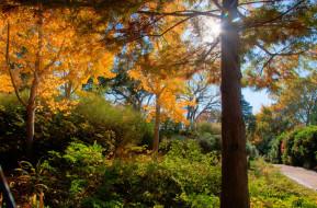 аллея, деревья, солнце