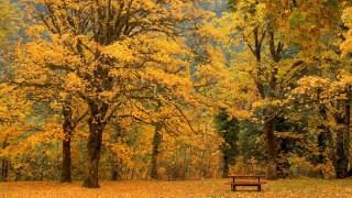скамейка, осень, листопад, деревья