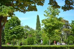 растения, люди, деревья