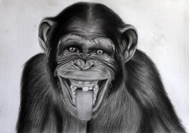 рисованное, животные, взгляд, фон, обезьяна, язык