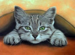 котенок, фон, взгляд