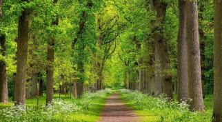 аллея, деревья