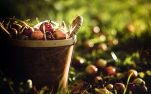 фрукты, яблоки