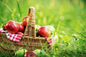 яблоки, корзинка