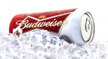 бренды, budweiser, пиво