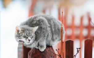 кот, коты, животные