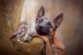 собака, животные, разные вместе
