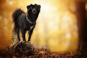 собака, животные, собаки