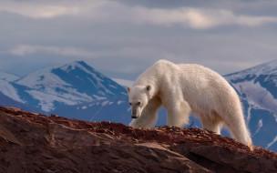 горы, природа, камни, белый медведь, скалы, пейзаж
