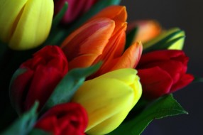 цветы, тюльпаны, разноцветные, букет