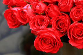 цветы, розы, бутоны, алый