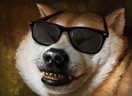 рисованное, животные, очки, фон, собака