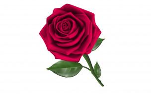 роза, цветы, фон