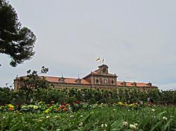 цветы, растения, здание