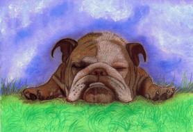 рисованное, животные, собака, трава, фон