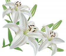 цветы, фон, лепестки