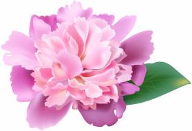 лепестки, фон, цветы
