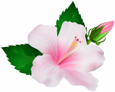 векторная графика, цветы , flowers, цветы, фон, лепестки
