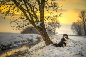 sunset, sunlight, road, winter, river, dog, sun, tree, australian shepherd, canine, snow