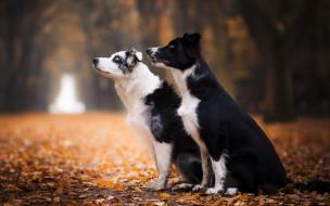 животные, собаки, осень, листья, деревья, аллея
