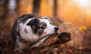 животные, собаки, осень, трава, пень, собака