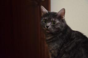 животные, коты, взгляд