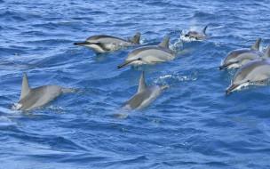 животные, дельфины, море, волны