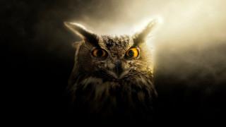 животные, совы, клюв, глаза, сова