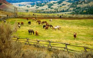 деревья, изгородь, пейзаж, загон, холмы, поля, природа, лошади