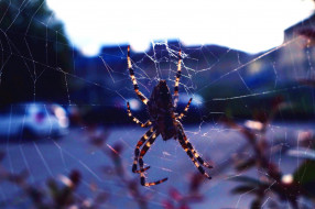 животные, пауки, паутина, паук