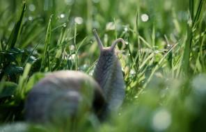 животные, улитки, улитка, трава, капли, роса