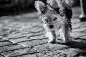 животные, собаки, собака