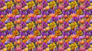 арт, фон, цветок, крокус, весна
