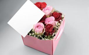 цветы, розы, подарок, бутоны