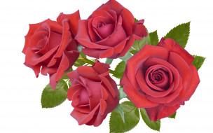 бордовые, розы, Четыре