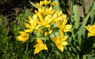 цветы, флора, Лилии
