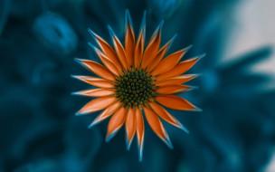 оранжевый, цветок
