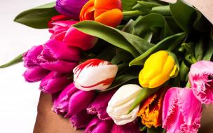 весенние, тюльпаны, цветы