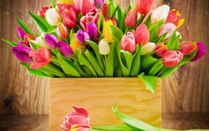 обои для рабочего стола 2560x1600 цветы, тюльпаны, букет, тюльпанов, коробка, радужные, цвета